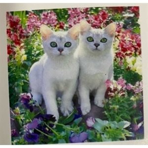 Diamond painting 30x30 cm - Bte incluse